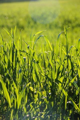 grass-1750593_960_720