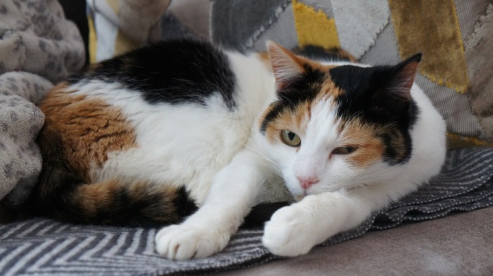 cat-2013494_960_720